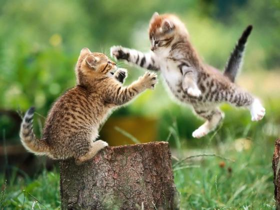 funny-cat-fight-getting-along-with-relatives